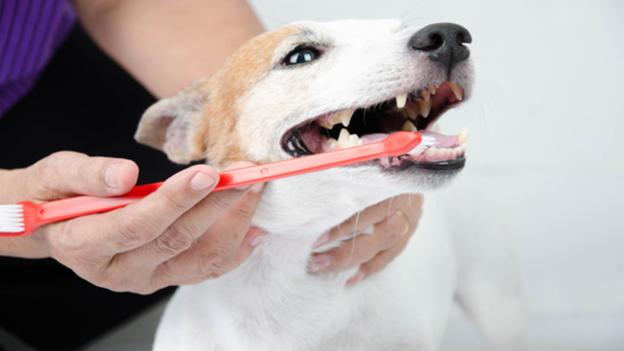 dog dental hygiene tips from corinth animal hospital in corinth texas
